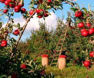 jardin frutas decoracion diez