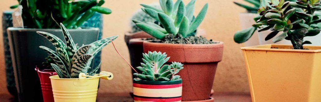 macetas de jardin decoracion diez