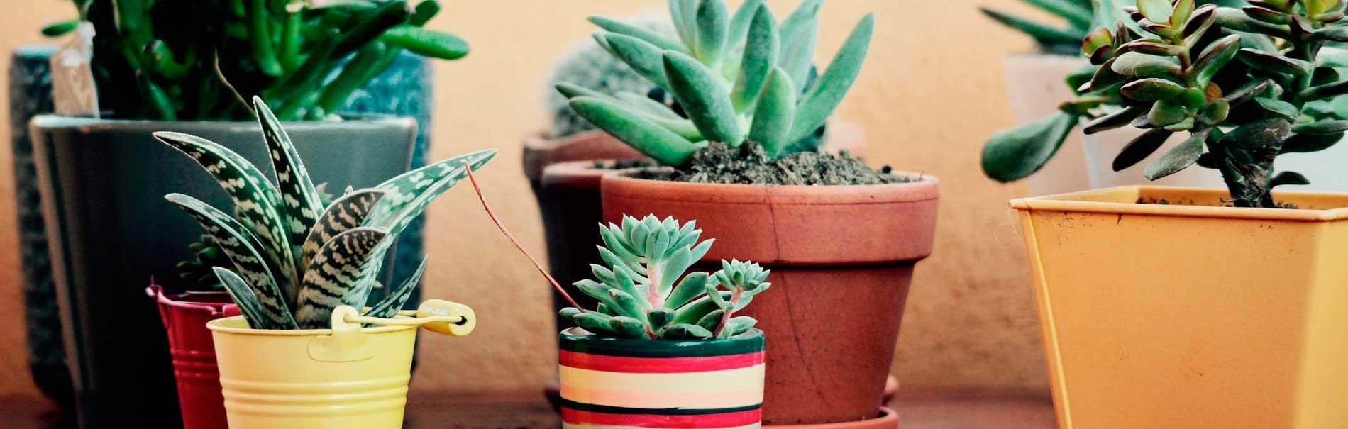 macetas-de-jardin decoracion diez